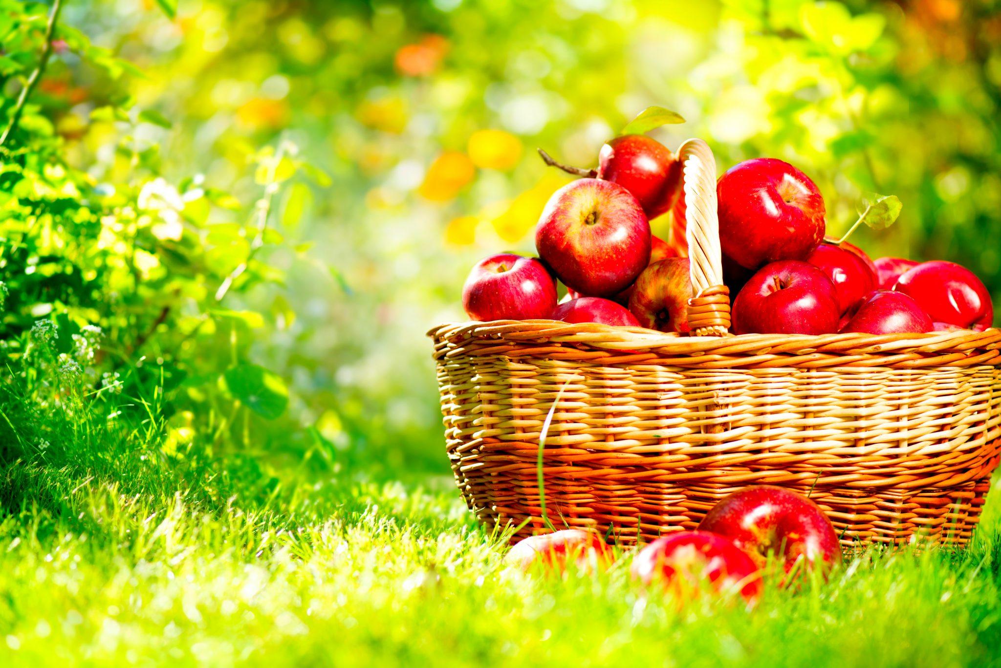 かごいっぱいに入ったリンゴ