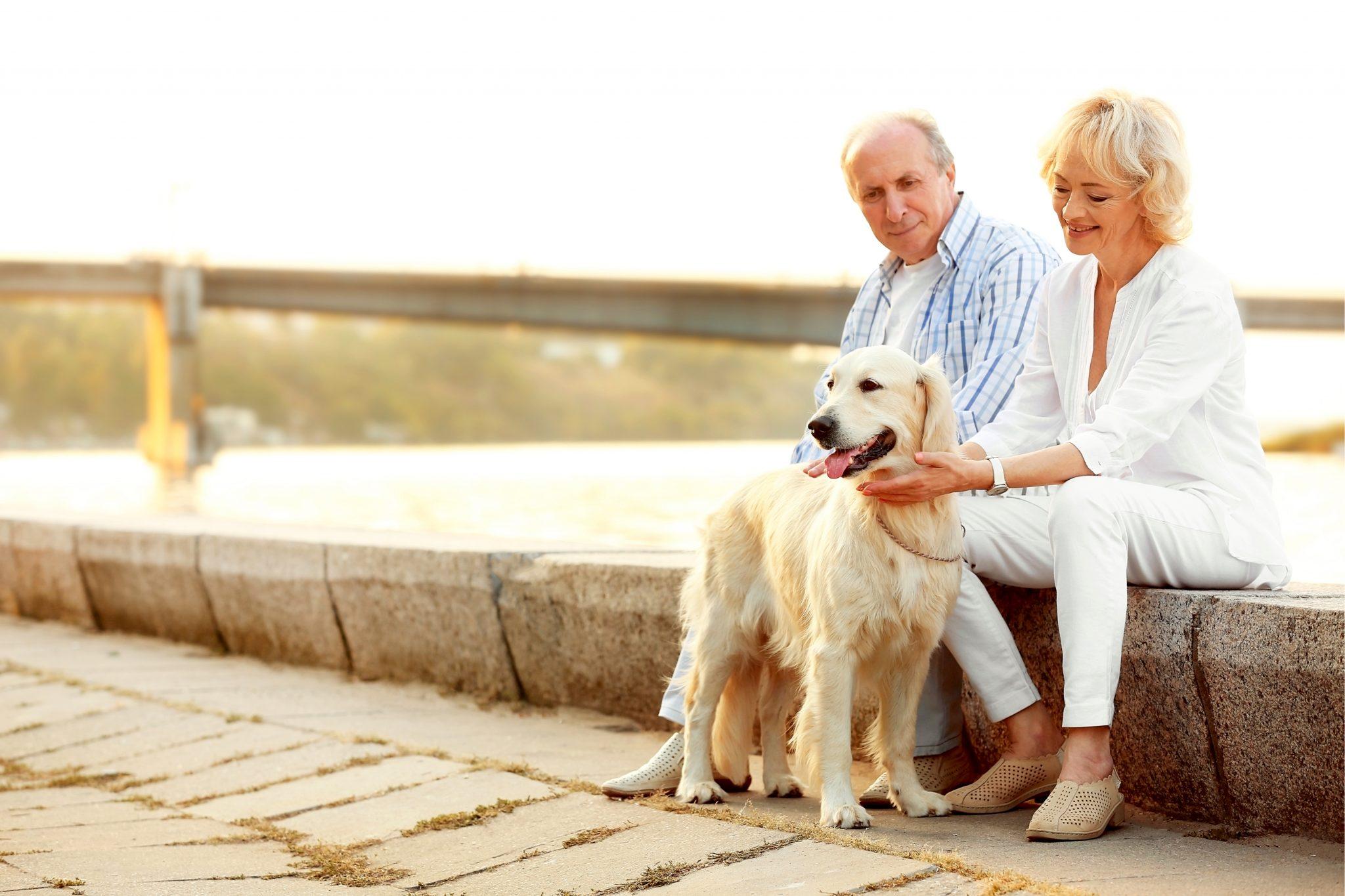 老夫婦がペットの犬を連れて散歩している
