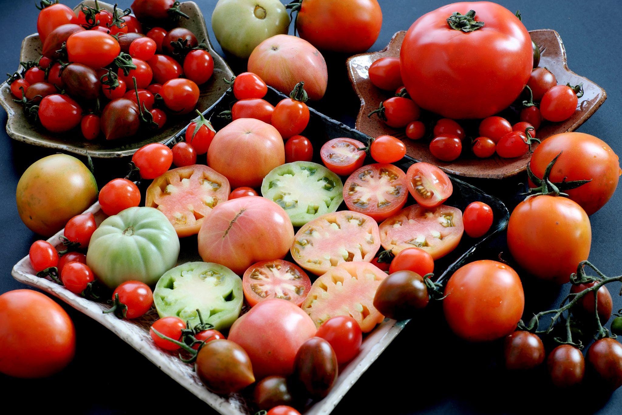 生食用、料理用、加工食品用のトマト一覧