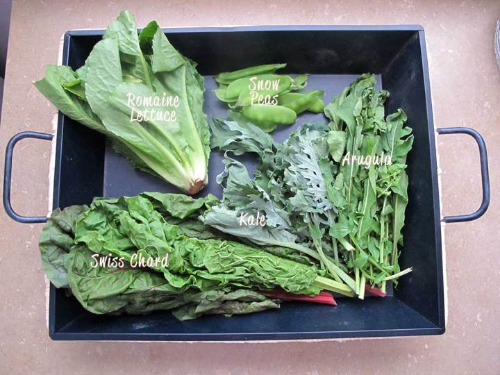 farmshare chronicles week 1 - lettuce, chard, kale, arugula, & snow peas