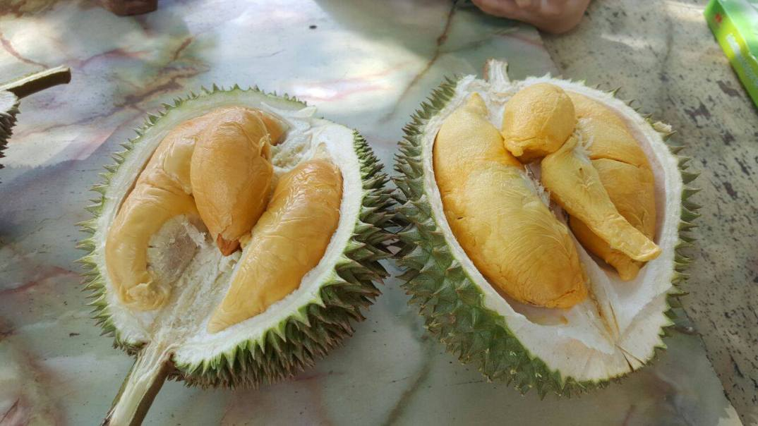 durian buffets - just durian