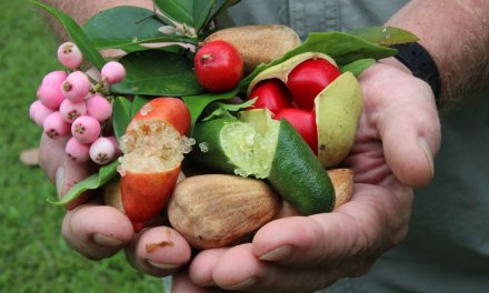 What you can grow in your backyard makes international chefs jealous