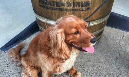 Dog's day out on the pet-friendly Granite Belt