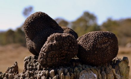 Treat yourself at Queensland's first Truffle Fest!