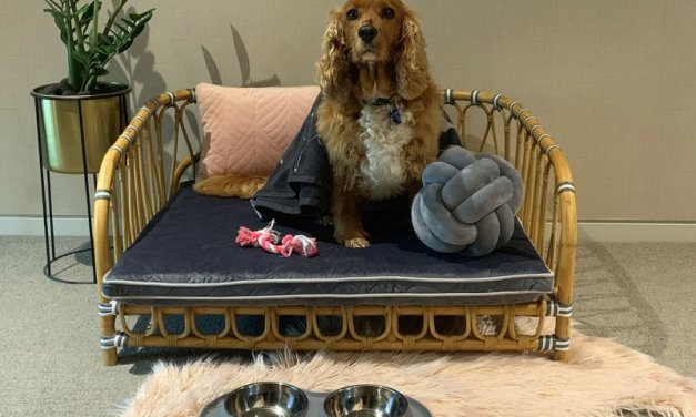 Pet-friendly hotels make holidays with dogs easy