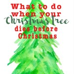 What to do when your Christmas tree dies before Christmas