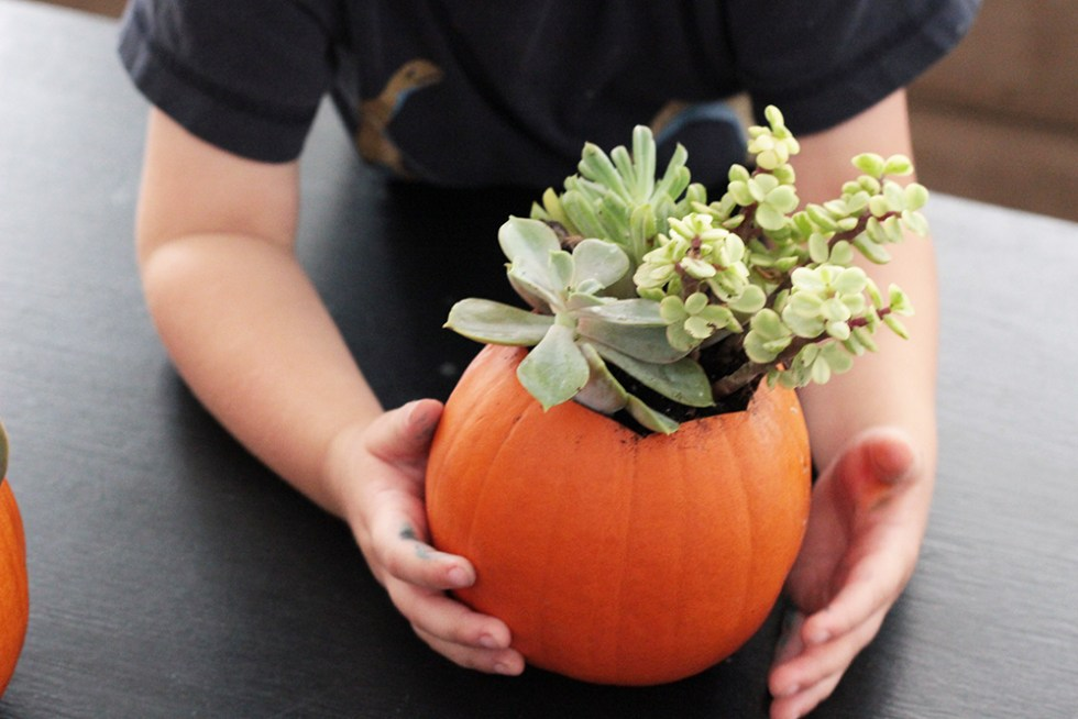 Succulents in pumpkins for fall decor
