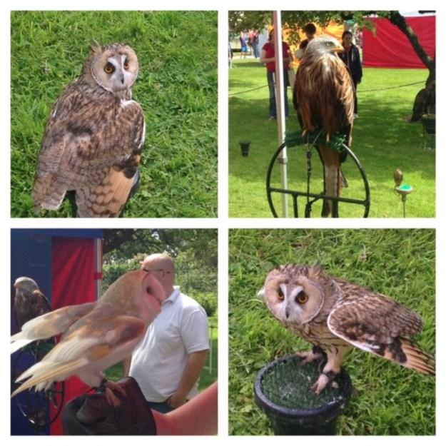 Owls & Hawks