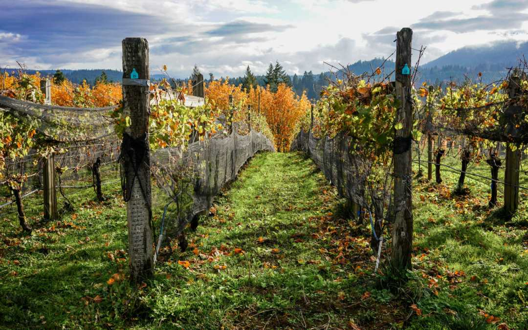 Eat, Stay and Play in Cowichan, BC all November Long!