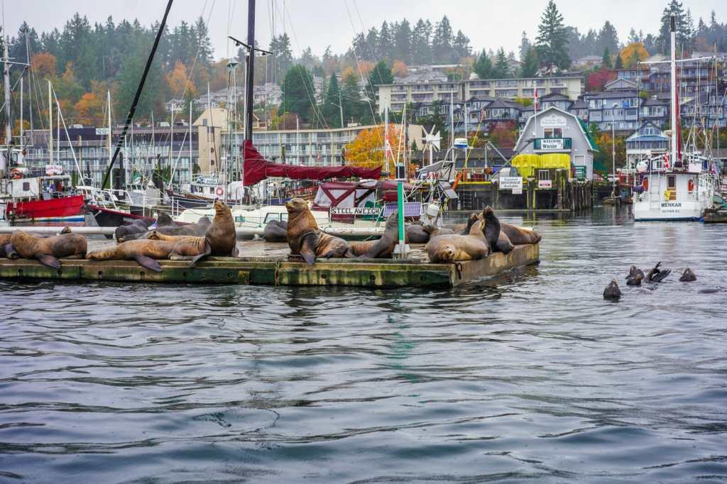 Ocean Ecoventures in Cowichan Bay, BC