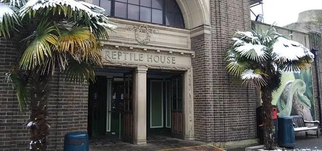 london-zoo-reptile-house-3