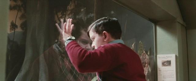Dudley, responsabile della brutta infanzia di Harry, prima di cadere nella teca del serpente