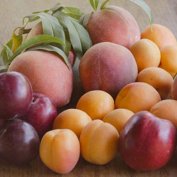 Order Fruit Gift Baskets Online