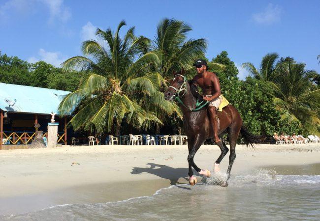 Día 2: Buceo y caballos en Providencia