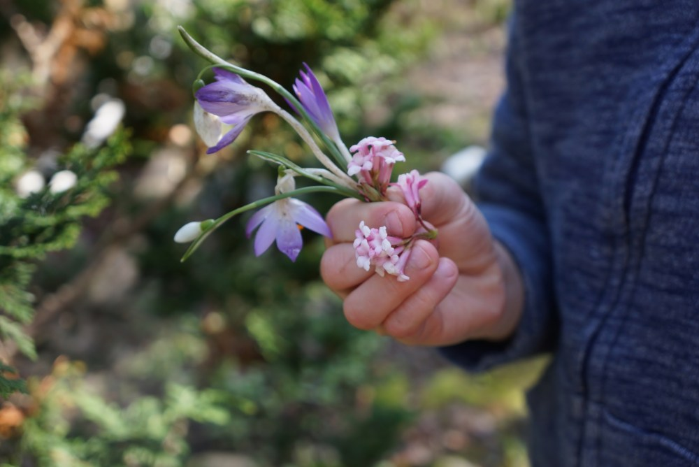 Brooks-flowers