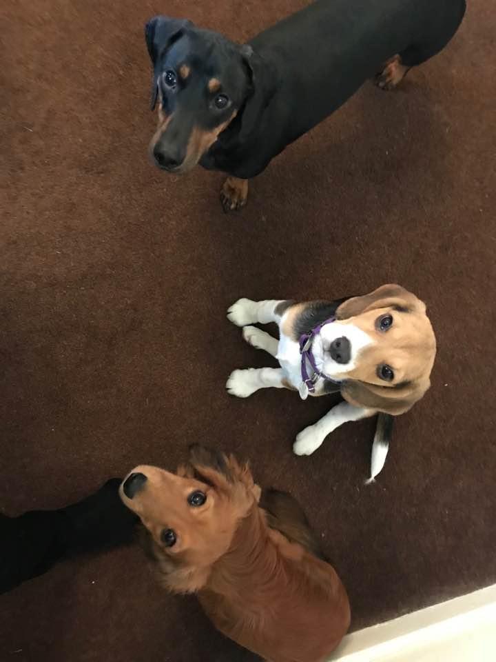 Dog Buddy: Chappie, Hank and Oscar