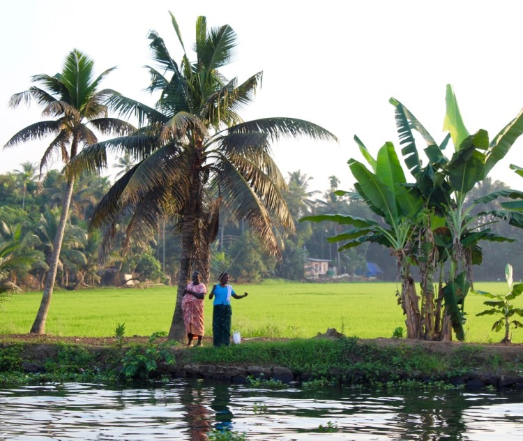 Kerala: backwaters