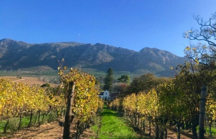Buitenverwachting: vines