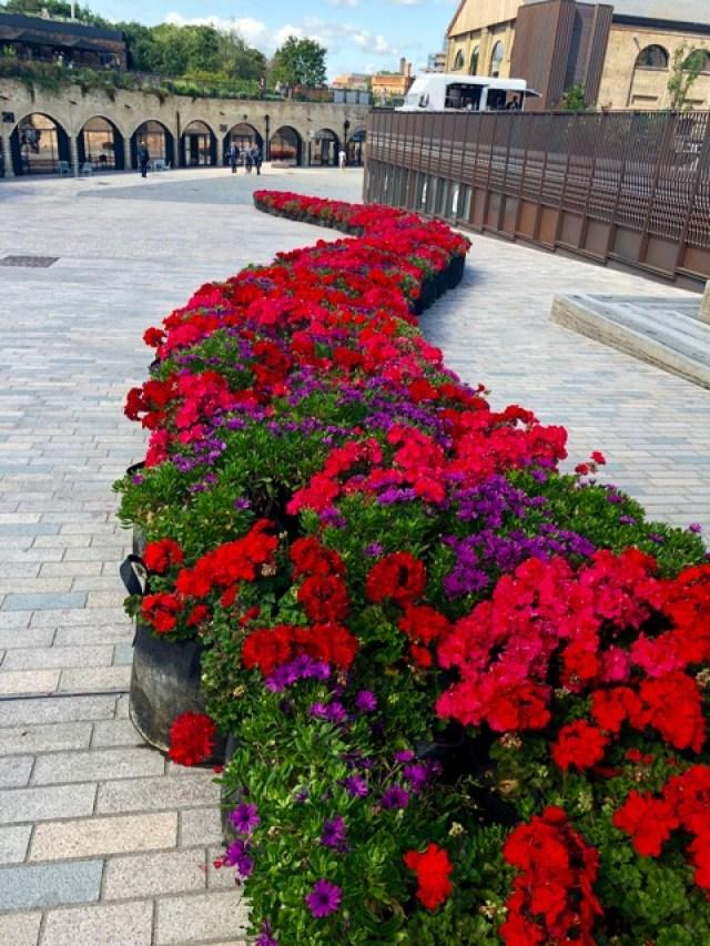 Vermuteria: flowers