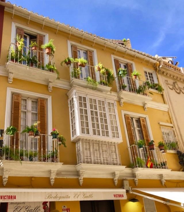 Malaga: flowers