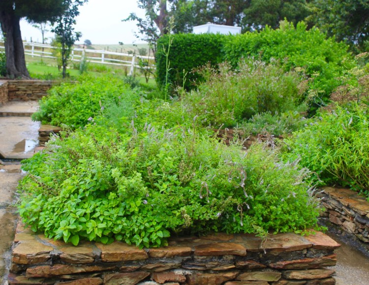 Stanford Valley: herb garden