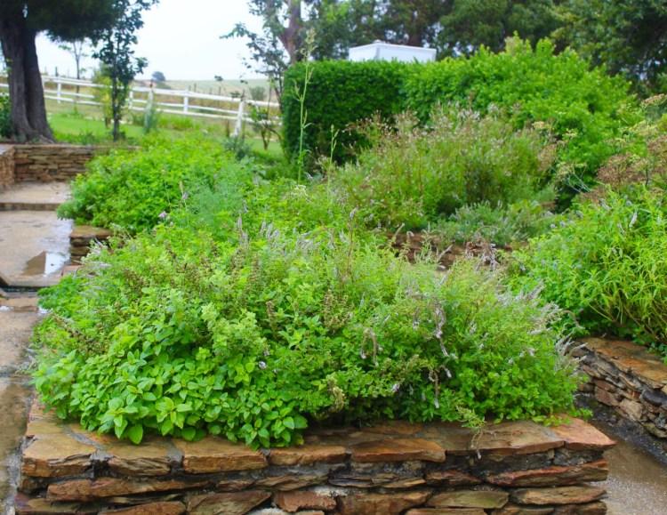 Stanford Valley: herb garden