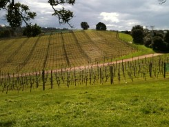 The vines waiting for the weather to get warmer