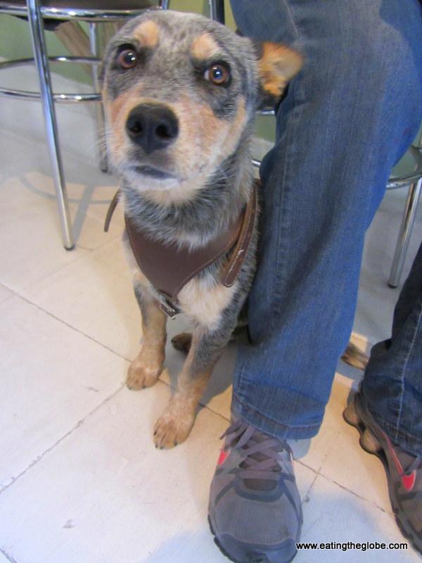 Dog at Cafe de la Mancha best coffee in San Miguel de Allende