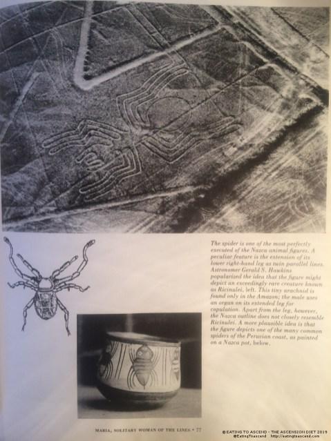 MayanSpiderNAZCAbook1