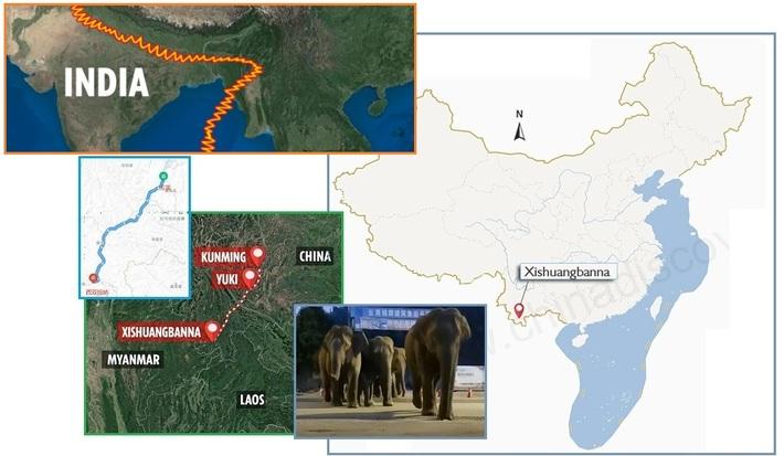 Elephants fleeing the earth falling away Spring 2021