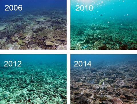 Image result for coral reefs recovering