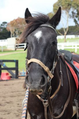 Horseback-winery-tour-mornington-peninsula-18
