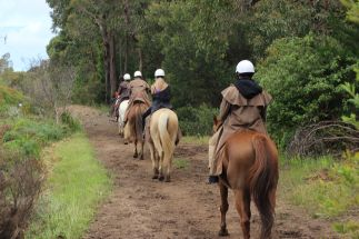 Horseback-winery-tour-mornington-peninsula-3