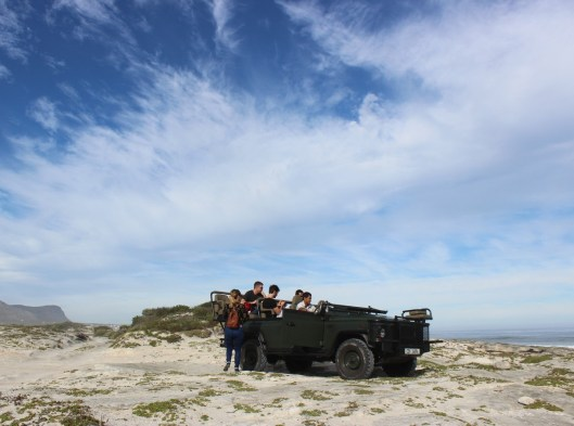 Beach safari from Grootbos
