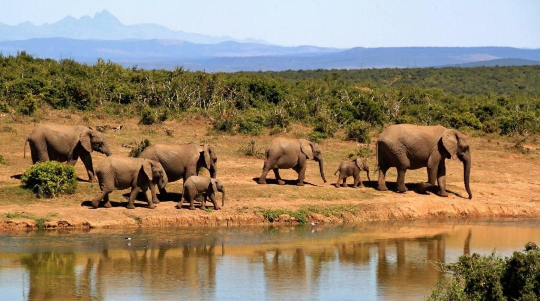 elephant-279505_1920