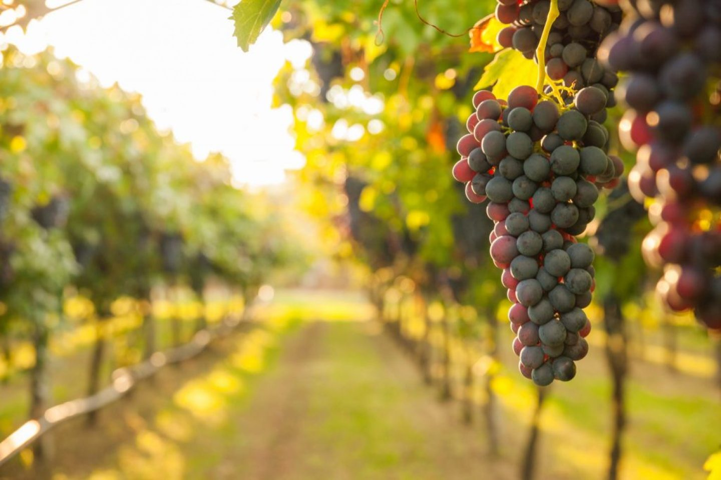 Charlottesville Wineries: A Visit On The Monticello Wine Trail