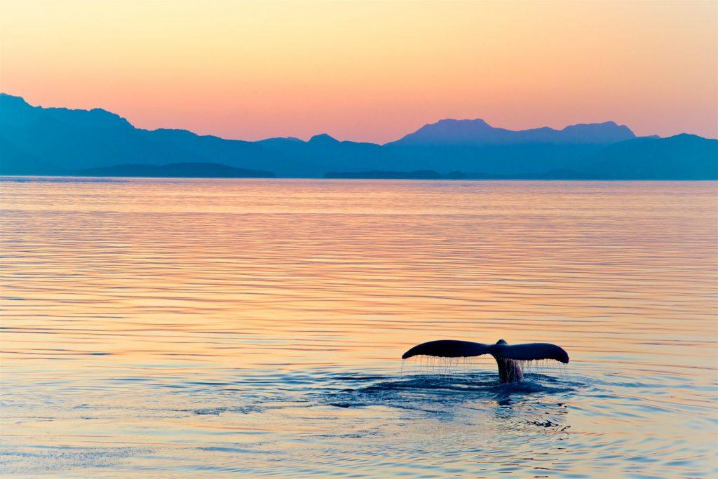 Alaska Holidays: A 7 Day Cruise Itinerary On The Norwegian Joy