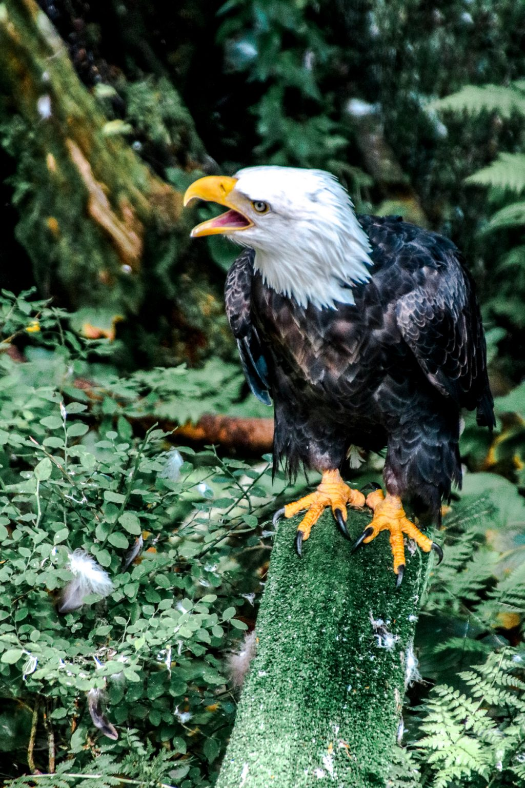 things to do in sitka - see bald eagles