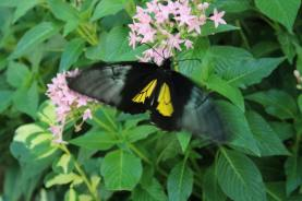 Butterfly's at the Wings of Mackinac