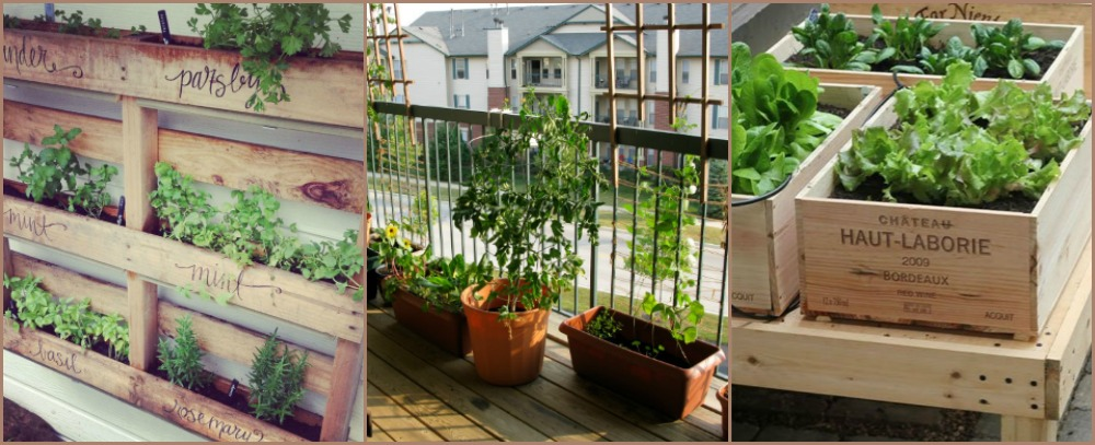 A Balcony Vegetable Garden