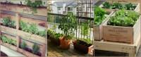 A Balcony Vegetable Garden