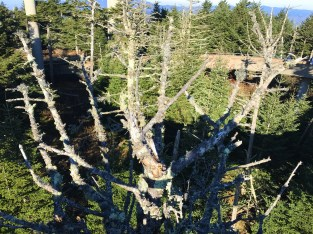 lichen-on-tree