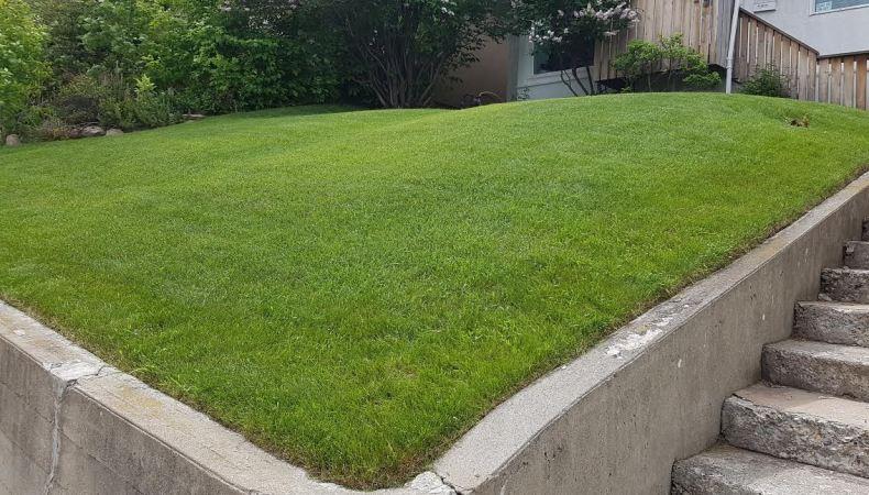 organic lawn care 50% off