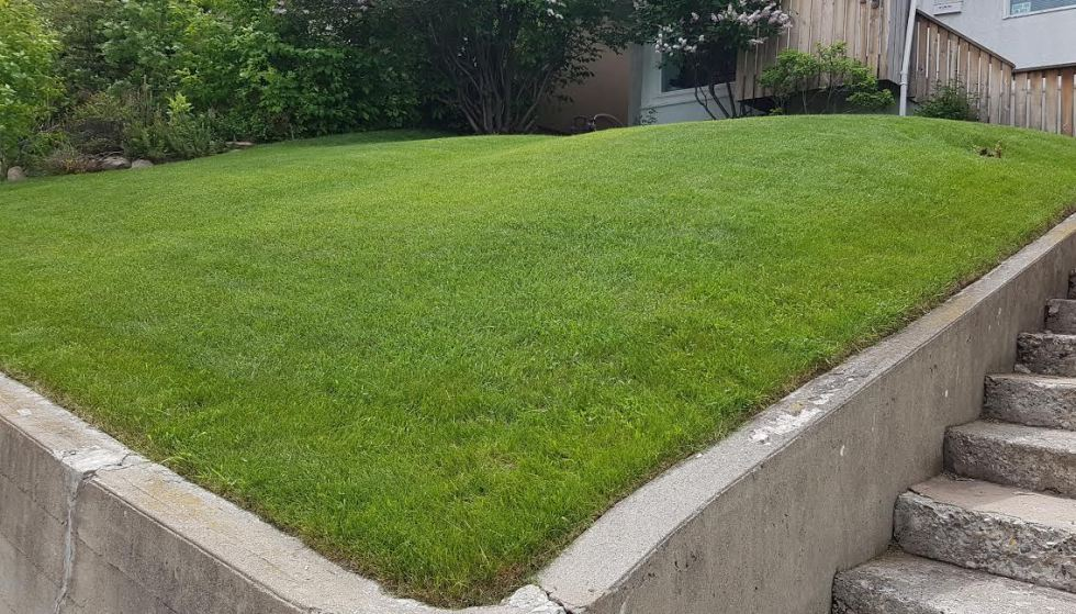 organically maintained lawn