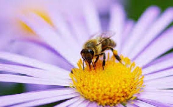 bee on flower spring fever organic land care