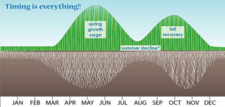 growth cycle of grass