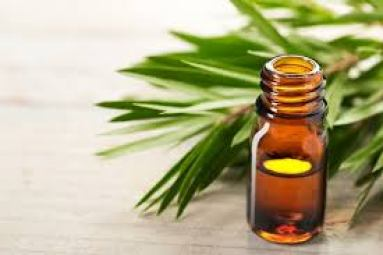 Tea tree Essential oils in bottle with leaves