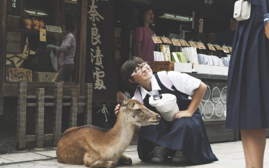 Une journée nature à Nara : les temples bouddhistes et daims en liberté