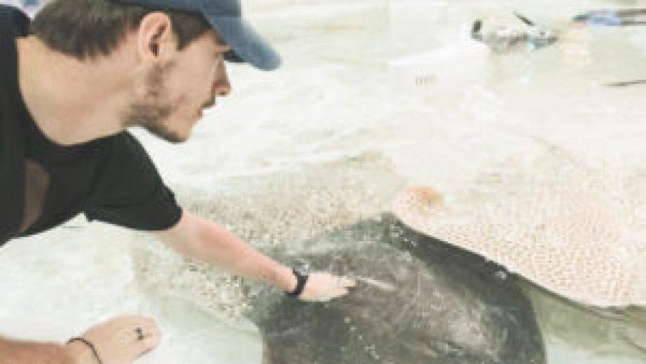 Eatmytravel caresse des raies et des requins à l'aquarium d'Osaka