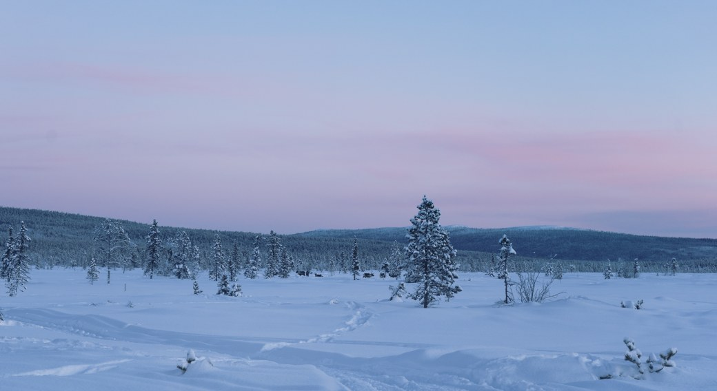 Ciel rose en Laponie